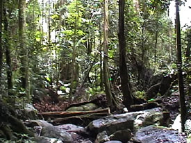 Mt. Warning Rainforest