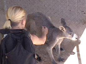 Kath and Kangaroo