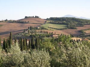 373_tuscany_s_fields_trees