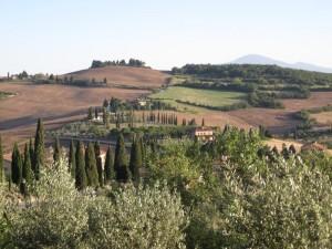 373_tuscany_s_fields_trees