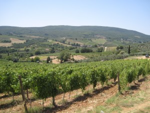 383_san_gimignano_vineyard