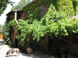 265_casale_a_poggiano_house_dog