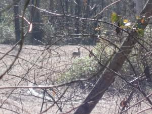2009120548_deer